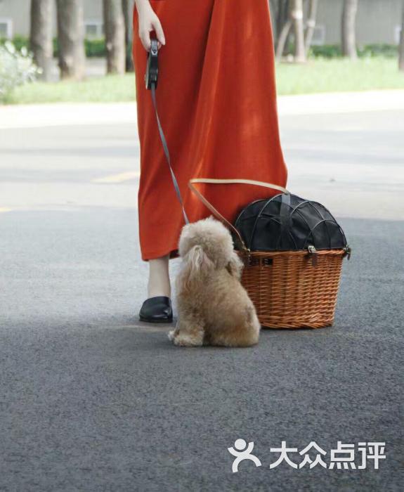 小兔子不乖不乖不的图片