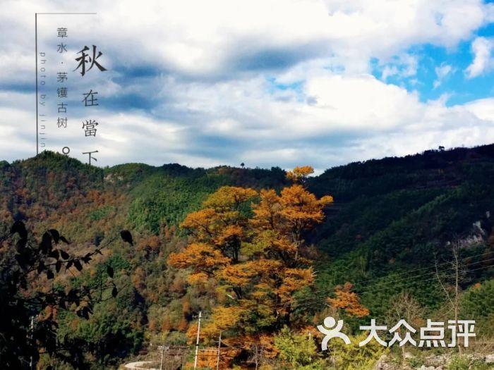 茅镬村-攻略-宁波周边游-大众点评网界图片妖4仙剑图片