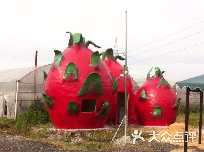 鼎康火龙果采摘园-火龙果造型图片-上海景点-大众