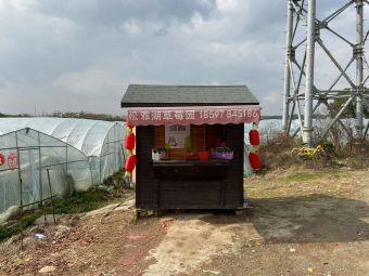 松雅湖草莓庄园