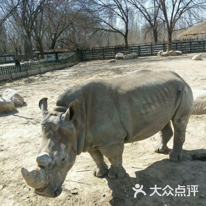 壁纸 犀牛 野生动物 700_700