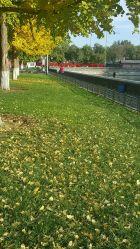 黄色卡杜拉的图片