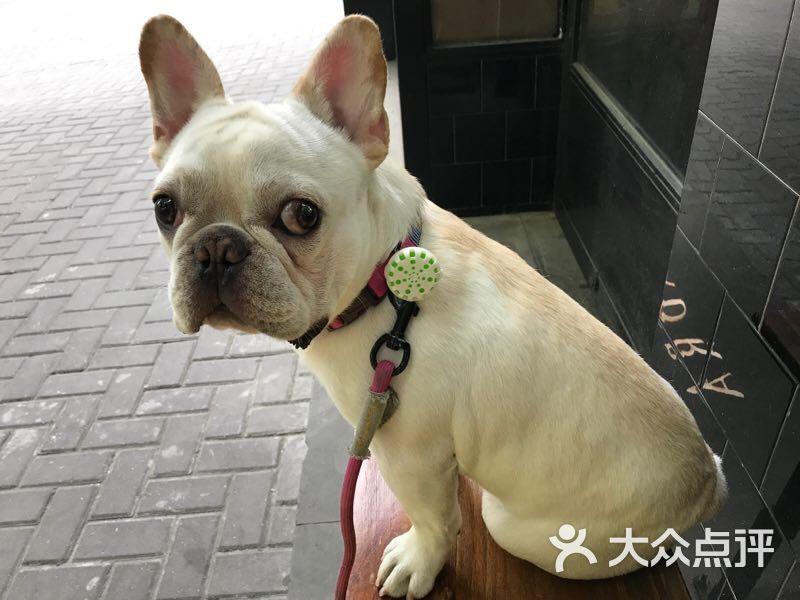 千航轩宠物图片 - 第2张图片