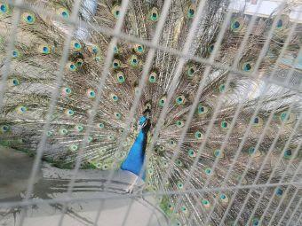河北省廊坊市香河县杨家寨主题公园国家电网电动汽车充电站