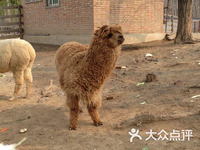 天津动物园傲娇草泥马图片 - 第1张