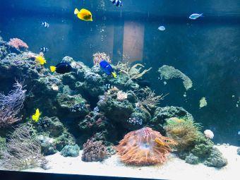 匹茲堡動物園&PPG水族館