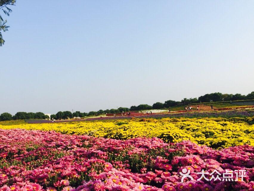 五厍农业休闲观光园图片 - 第39张图片
