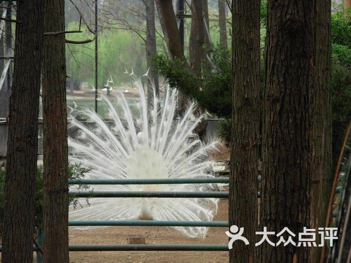 武汉动物园景点图片 - 第117张