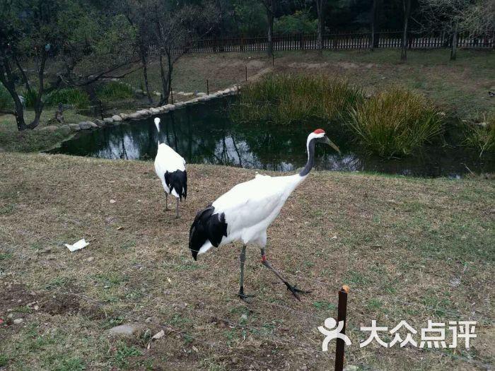 沈阳森林动物园丹顶鹤图片 - 第76张