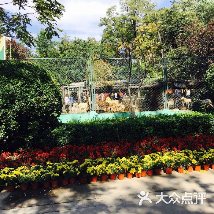 保定市动物园图片-北京动物园-大众点评网