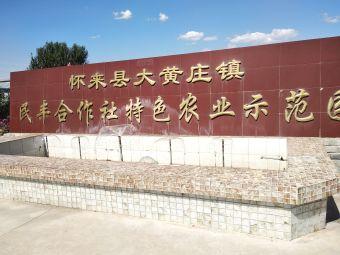怀来县大黄庄镇民丰合作社
