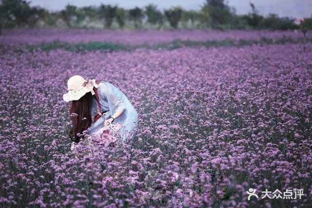 紫海蓝山薰衣草庄园图片 - 第6张