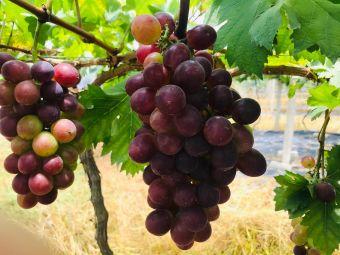 健农葡萄庄园