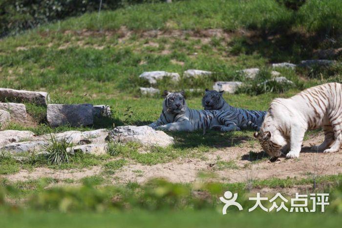 北京野生动物园自驾迷你散放区图片 - 第153张