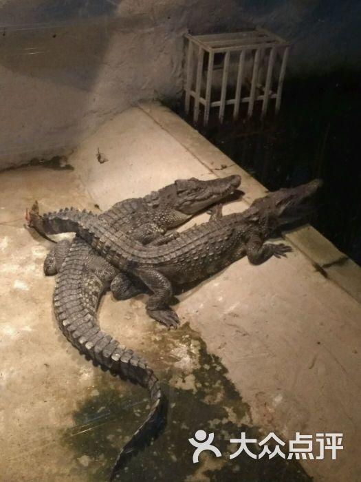 福州动物园-鳄鱼图片-福州周边游-大众点评网