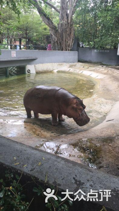 律实动物园图片 - 第2张