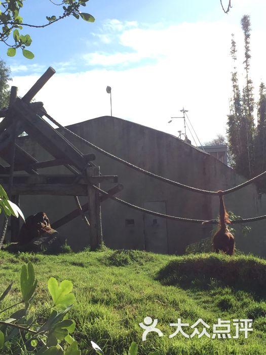 奥克兰动物园图片 - 第3张