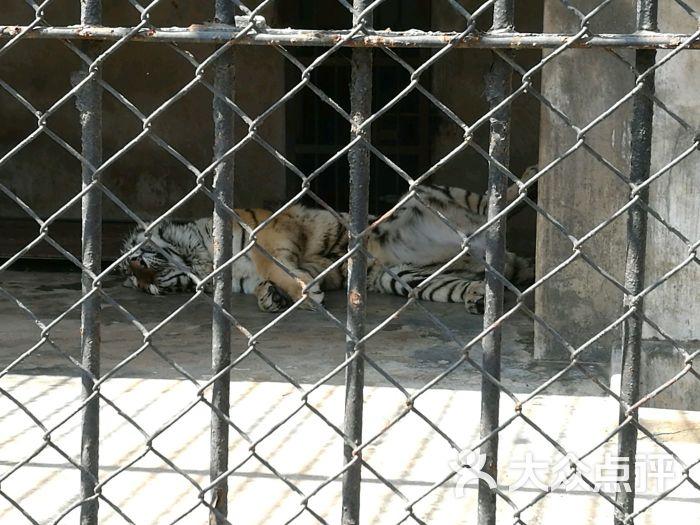 南通动物园图片 - 第5张