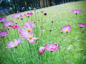 富禾蓝莓采摘园
