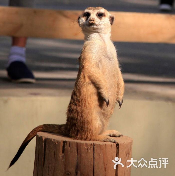 北京野生动物园-左侧wu的相册-北京景点-第2页-大众