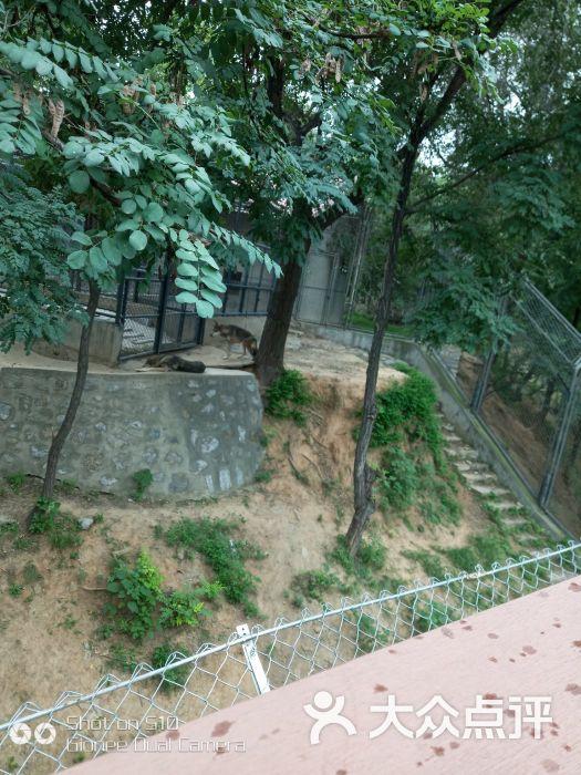 石家庄动物园图片 - 第1张