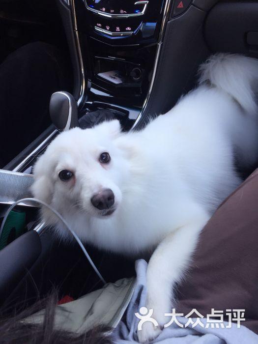 棉布私宠物图片 - 第49张图片
