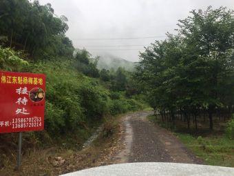 梁弄东溪村梅缘农场