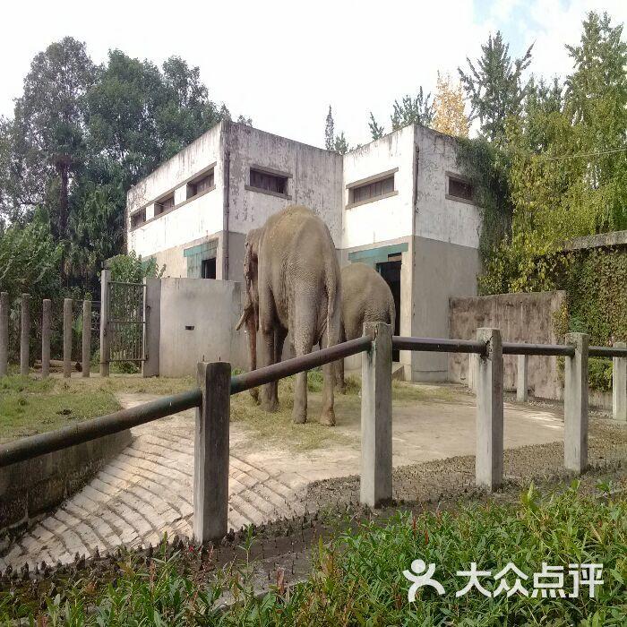 成都动物园图片 - 第3张