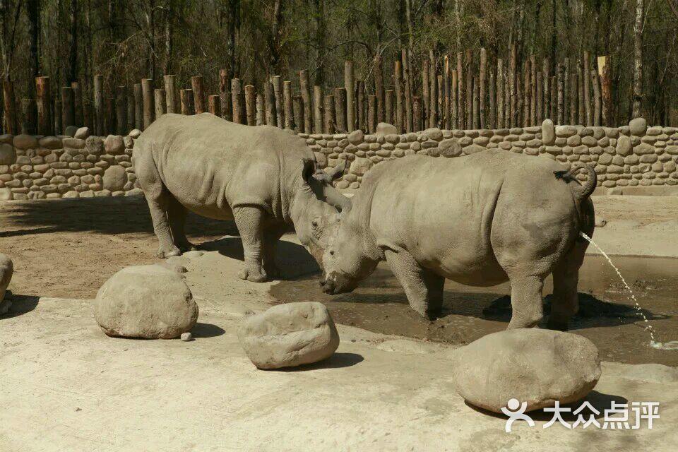 犀牛 野生动物 960