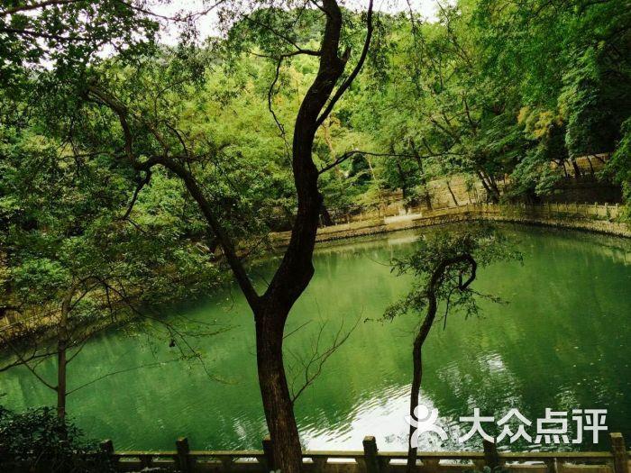 天童国家森林公园-图片-宁波周边游-大众点评网