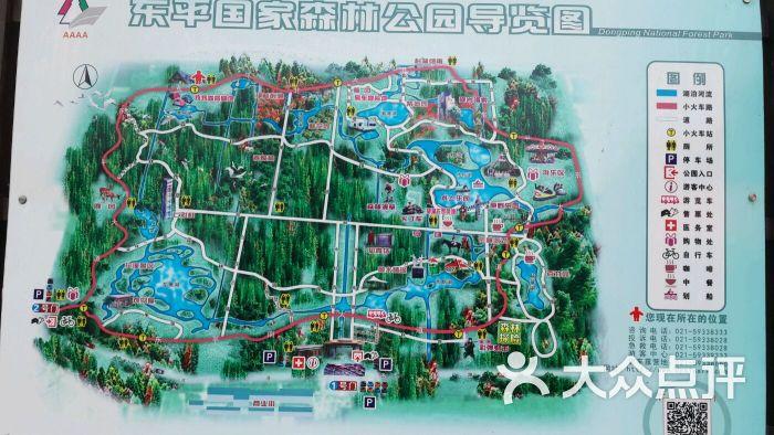 东平森林公园房车露营地图片 - 第3张