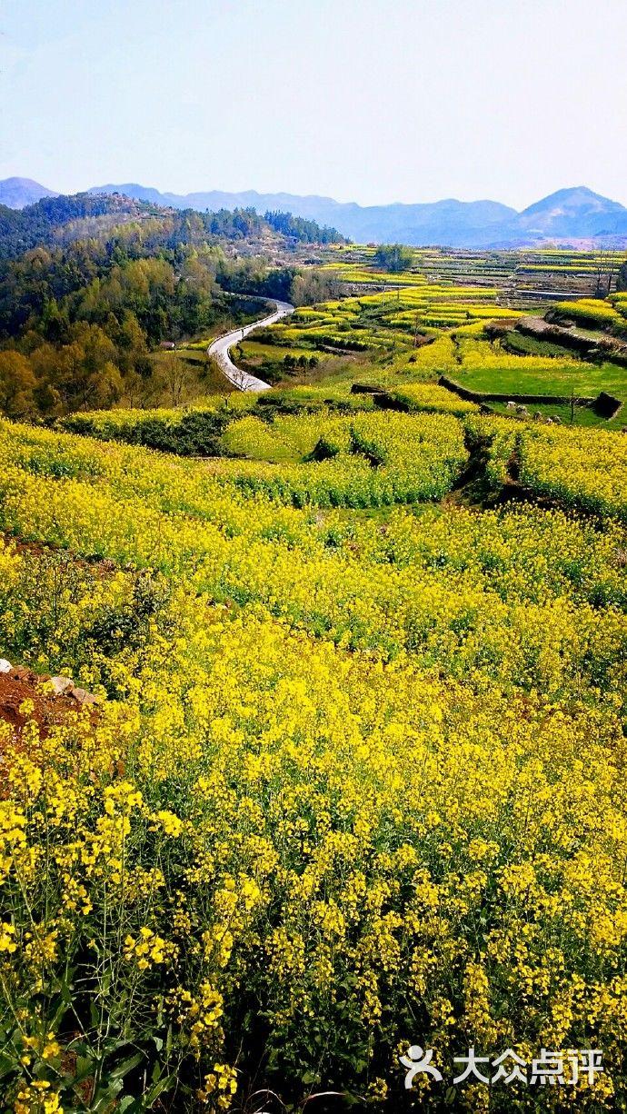 桑洲油菜花景区-图片-宁海周边游-大众点评网
