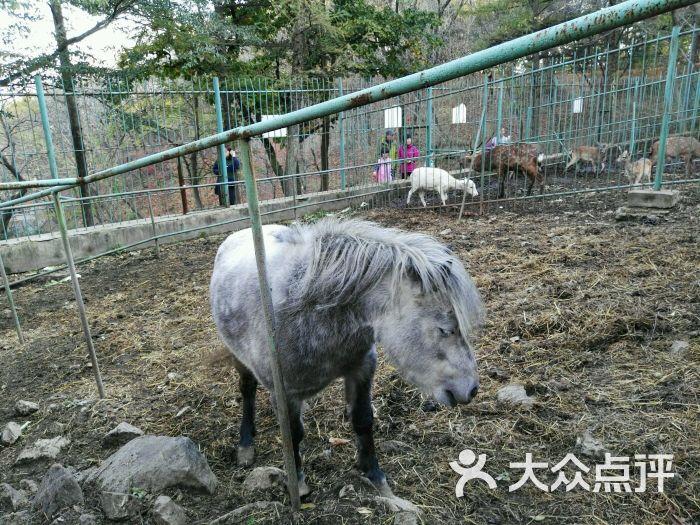 锦江山公园-图片-丹东周边游-大众点评网
