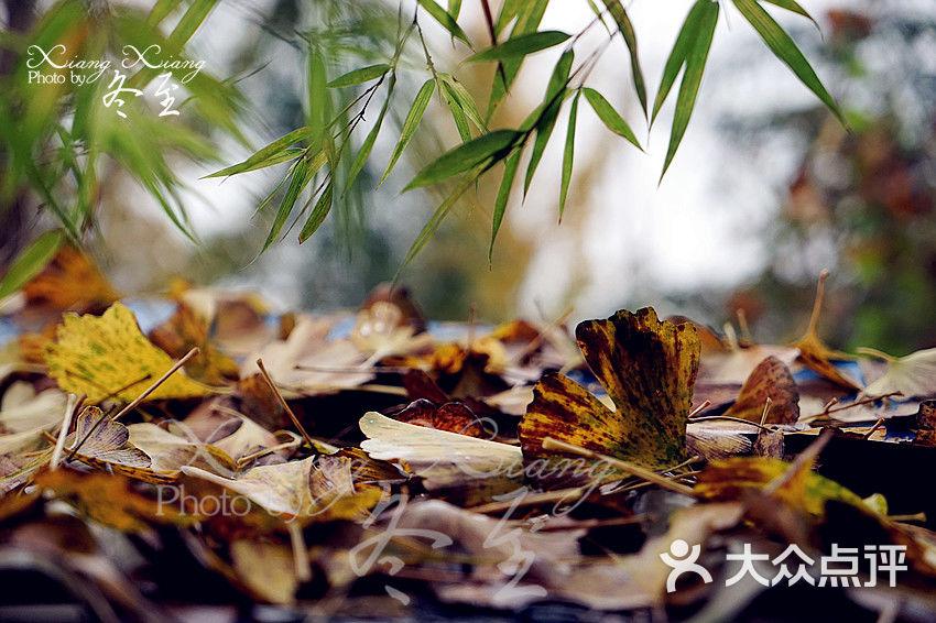 银杏叶子做动物