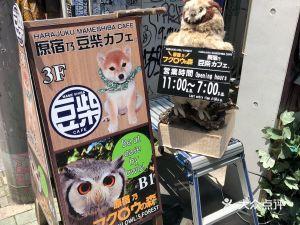 原宿豆柴cafe&猫头鹰森林