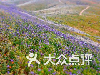 羚羊谷罂粟花保护区