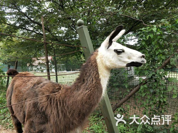 青岛动物园图片 - 第259张