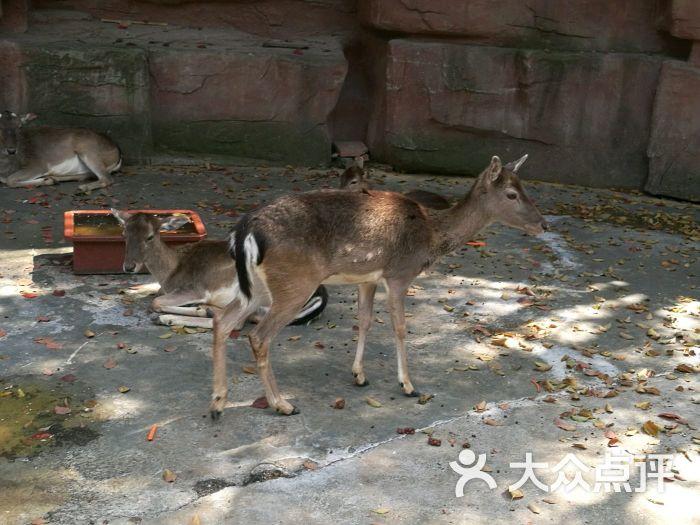 南通动物园图片 - 第8张