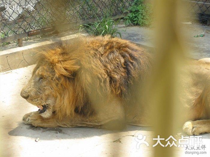 武汉动物园-狮子图片-武汉景点-大众点评网