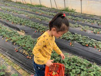 超甜草莓园