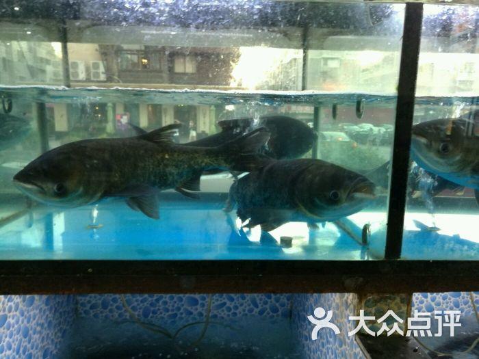 千岛湖蒸汽石锅鱼图片 - 第4张