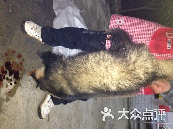 獾猪 X 694258的图片 大众点评网