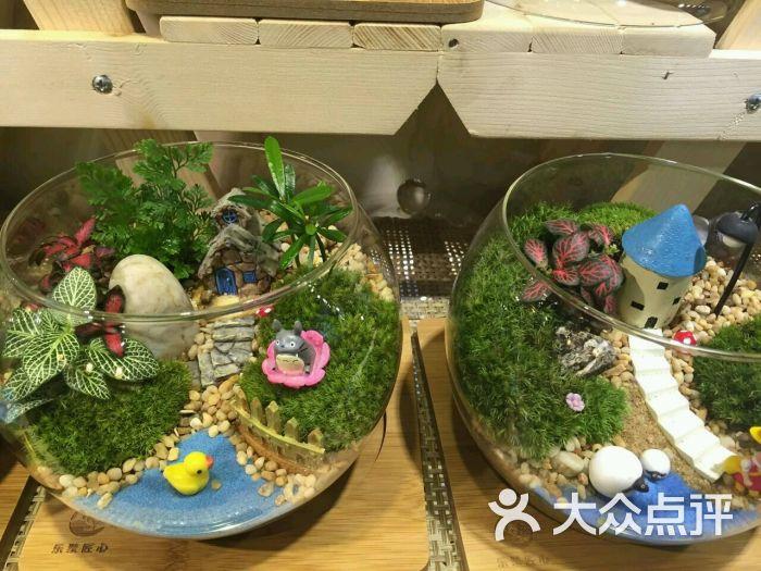 乐聚匠心微景观创意植物手工坊
