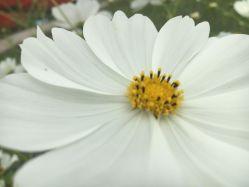 海濱花卉園的圖片