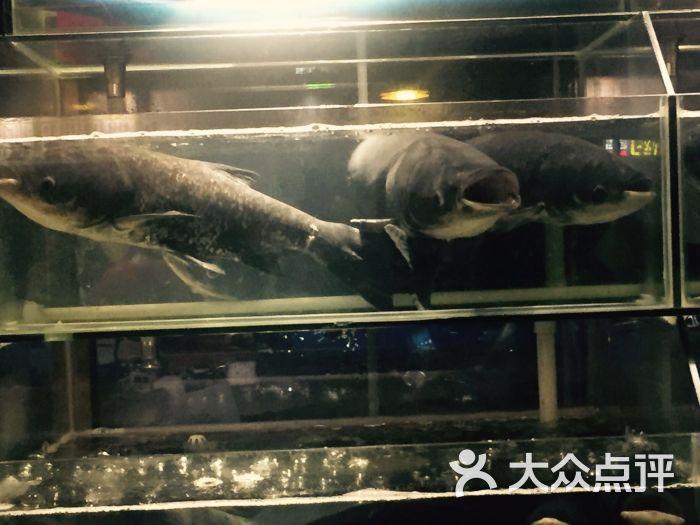 千岛湖蒸汽鱼图片 - 第10张