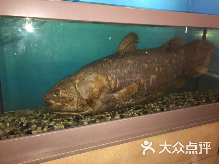 中国古动物馆图片 - 第3张