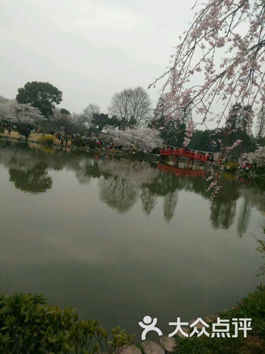 东湖磨山风景区-图片-武汉景点-大众点评网