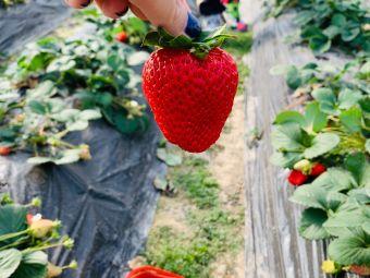 瑞里草莓园