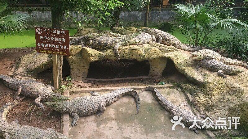 小王子的蟒蛇岛