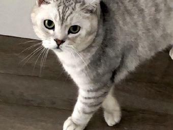 Hello猫咪生活馆